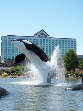 Tulalip whale