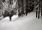 Rossland BC cross country skiing